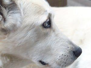 Ein auf einem Hunde Sitzsack ruhender Hund